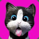 Daily Kitten : 虚拟宠物猫小猫动物