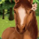 HorseHotel - 照顾马儿们