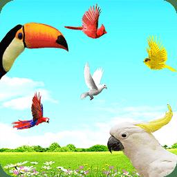 Sky Birds Live Wallpaper Free下载安卓最新版 手机app官方版免费安装下载 豌豆荚