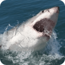 大白鲨 - 动态壁纸