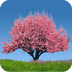 春季樱花树