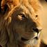 狮子动态壁纸