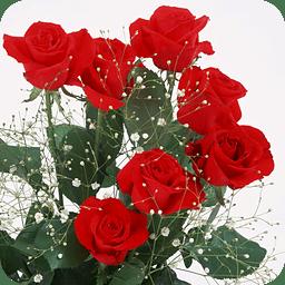 Cool 3d玫瑰壁纸下载安卓最新版 手机app官方版免费安装下载 豌豆荚