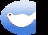 鸽子 Pigeon