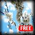 櫻花動態壁紙系列之六