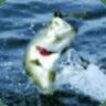 钓鱼游戏 fishing game