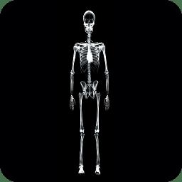 人体X光扫描仪