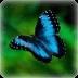 蝴蝶主题动态壁纸