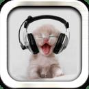 听音乐的猫壁纸 Music Cat
