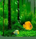 3D鱼缸动态壁纸
