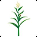 农作物种子