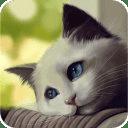 Cute Cat Cut Puzzle Game