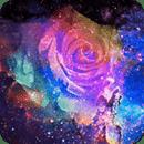 玫瑰炫彩星空动态壁纸