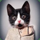 喵:猫兽面