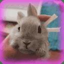 兔子电池部件