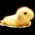 桌面宠物萌小兔