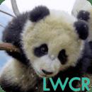熊猫宝宝的LWP