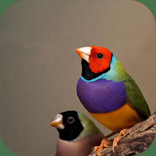 鸟声音和铃声