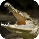 终极鳄鱼模拟器
