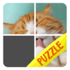 Cats of Puzzles: Free Sliding Puzzle Game