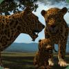 真实 豹 模拟器