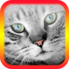Translator for Cats - Cat Translator