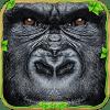 最终的大猩猩氏族模拟器