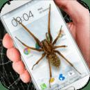 蜘蛛在手机好笑的笑话