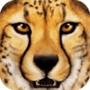 热带草原动物模拟器