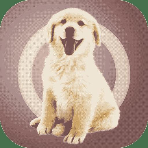 人狗交流器